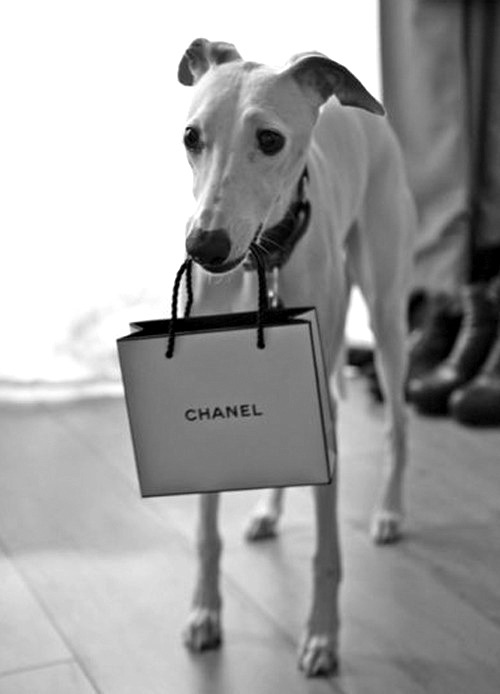 A hound has to shop!