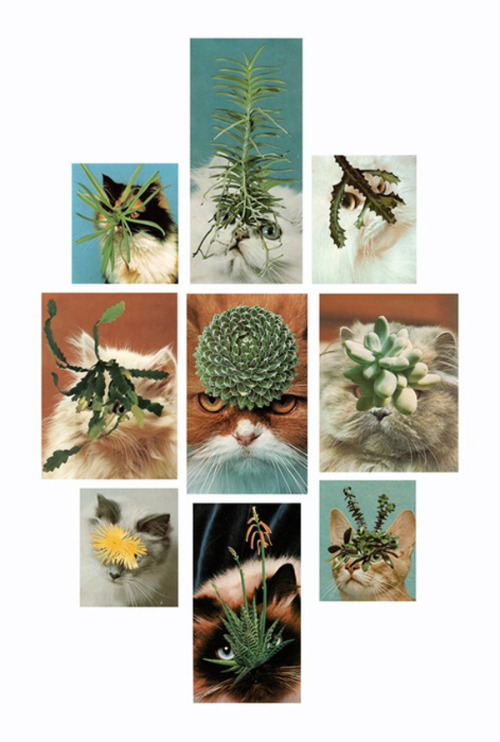 flavorpill:  Succulent Porn for Design Lovers  SUCCULENTS. AND CATS. WITH SUCCULENTS. Now I understand why Tumblr was made; to allow my eyes to feast on this gloriousness. :D  (Memo to self: do more work on your succulent wall this spring. It must be completed!)