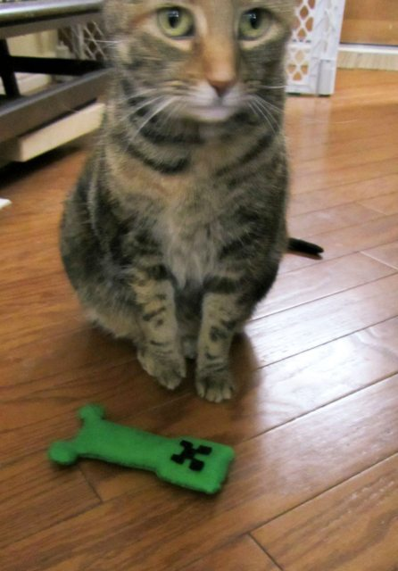 m1n3cr4ft:  in honor of the new creeper AI, raqie made his/her cat a creeper toy!