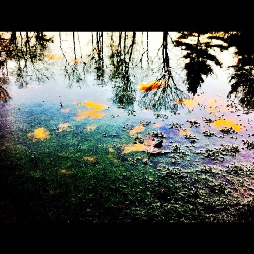 #puddle #nature #reflection #leaves #golfcourse #gallopinghill #nj   (Taken with instagram)