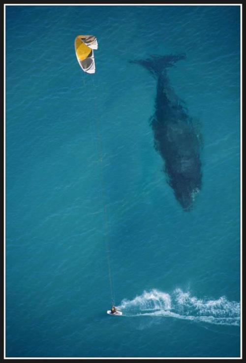 (via Kiteboarding with Whales | StokeReport)