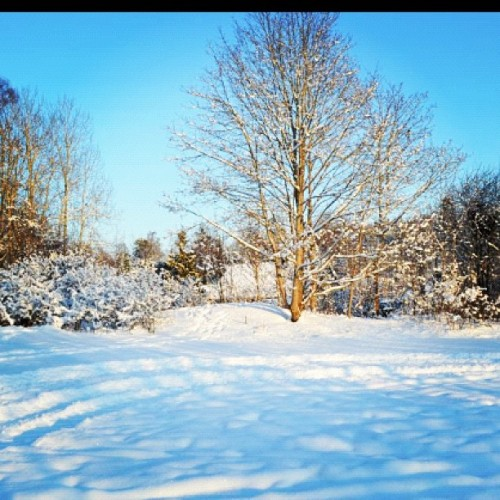 #sweden#swedishwinter#winter#snow#cold#nature#pretty#photography #ig#like#follow  (Taken with instagram)