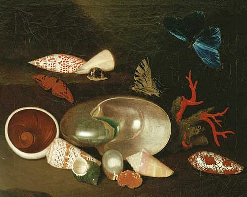 Philipp Sauerland Still Life with Shells and Butterflies 18th century