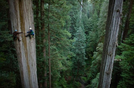 thenature-blog:  the tallest trees (by NatGeo*)