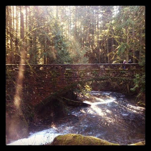 laughingliese:  Beautiful!  (Taken with Instagram at Whatcom Falls Park)