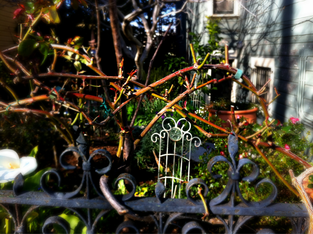 secret garden  Passed this yard on Hayes earlier during my afternoon snacking and photographing through San Francisco.