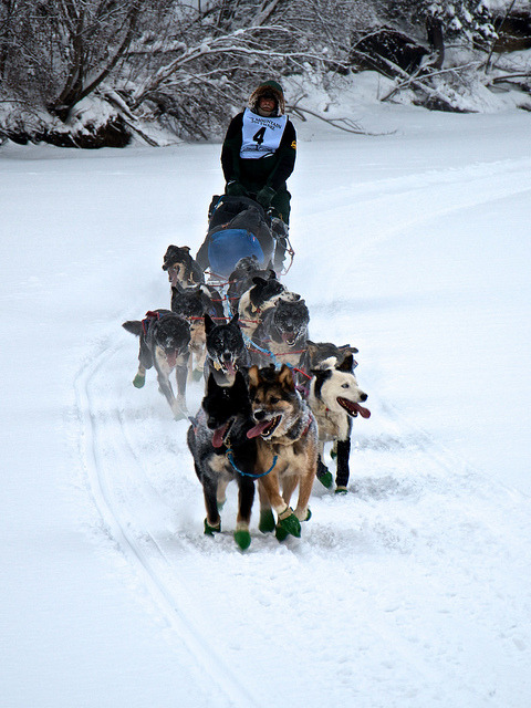 DSC_0050 on Flickr.Yukon Quest 2012, Fairbanks, AK
