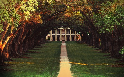 thirdcoastclassic:  Oak Alley Plantation, Vacherie, LA (via thehousefinch)