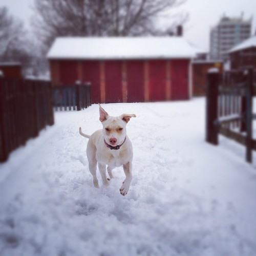 Kandy's 1st snow experience (Taken with instagram)