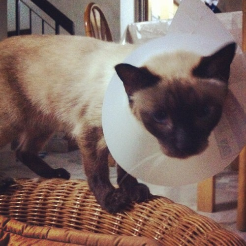 Injured cat  (Taken with instagram)