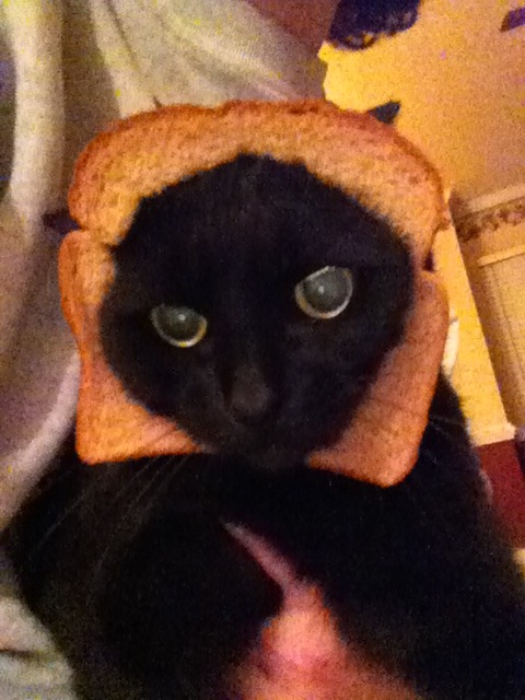 Karma kitty enjoying bread!