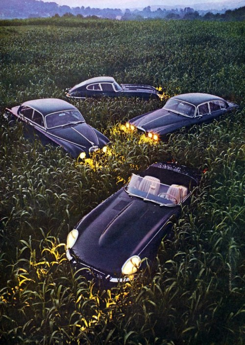 everandwright:  1968 Jaguar Advertisement