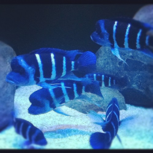 #fish (Taken with instagram)