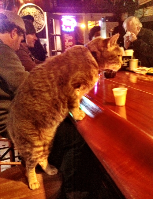 cajunboy:  Before the Krewe du Vieux parade, I saw a cat enter a bar (Molly's), plop itself up on a barstool and get served a drink. And that wasn't even the strangest thing I saw last night. (Photo by my lovely friend Skye)