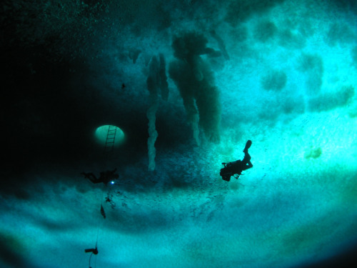 scipsy:  A diver ascends to the bottom of the sea ice at the Cape Evans Wall, a popular dive site for scientists in McMurdo Sound. (Photograph by: Rob Robbins; via Antarctic Photo Library)