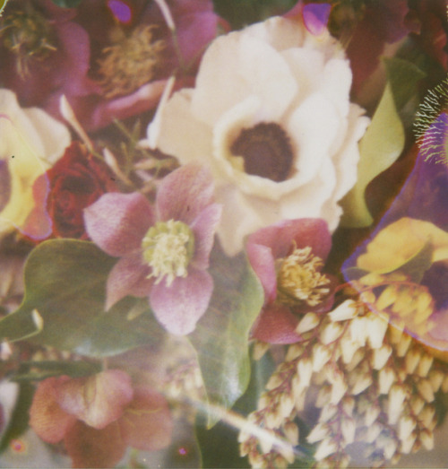 INSPIRATION flaventia:  flowers and old film by danske on Flickr.