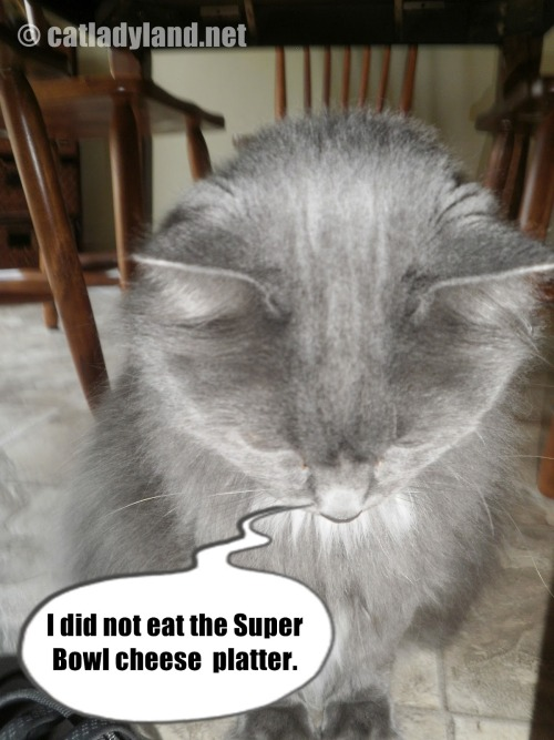 catladyland:  Lying Super Bowl Cat