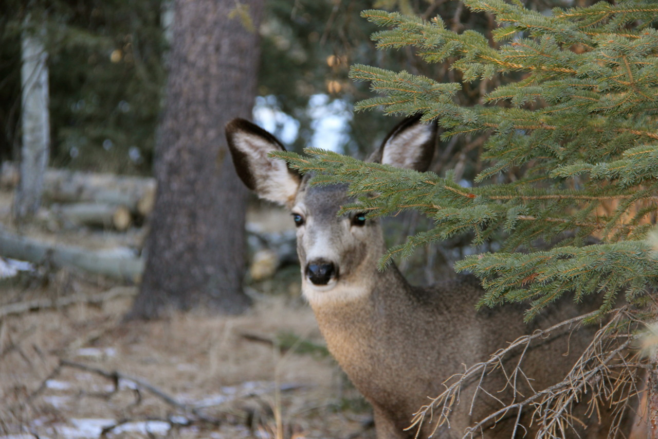 a deer on the trail, quietly watching