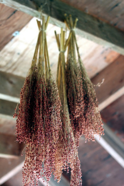 awelltraveledwoman:  Herbs Drying by serendipityflicious on Flickr.