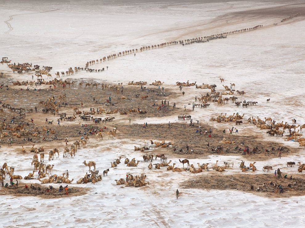 Caravans, Ethiopia Photo: George Steinmetz Evoking a scene from biblical times, caravans arrive at the salt mines of Lake Asele, 381 feet below sea level. For centuries salt blocks, called amole, were used throughout Ethiopia as money.