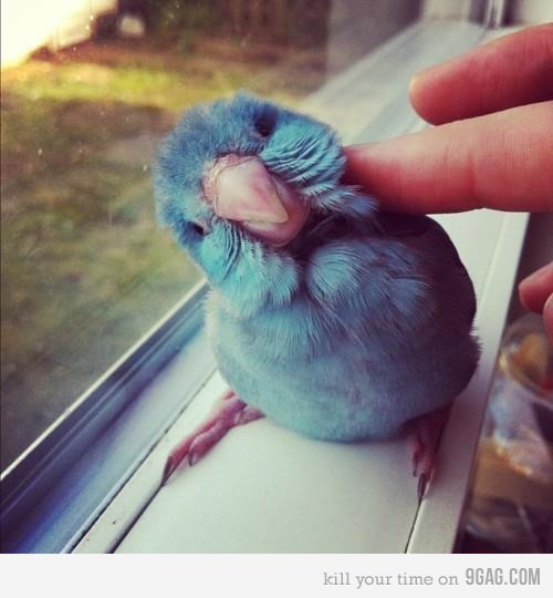 9gag:  (via 9GAG - Is it the Twitter bird?)