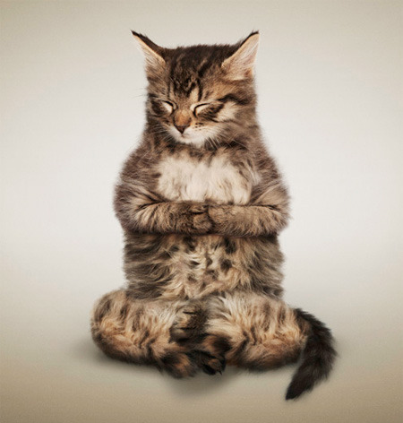 Yoga Cats (click photo for more!)