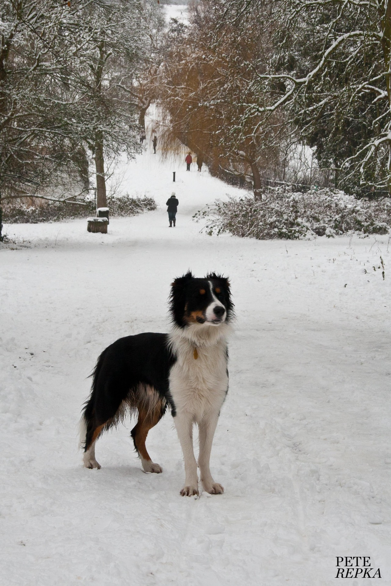 Dog Day In The Snow - No.5