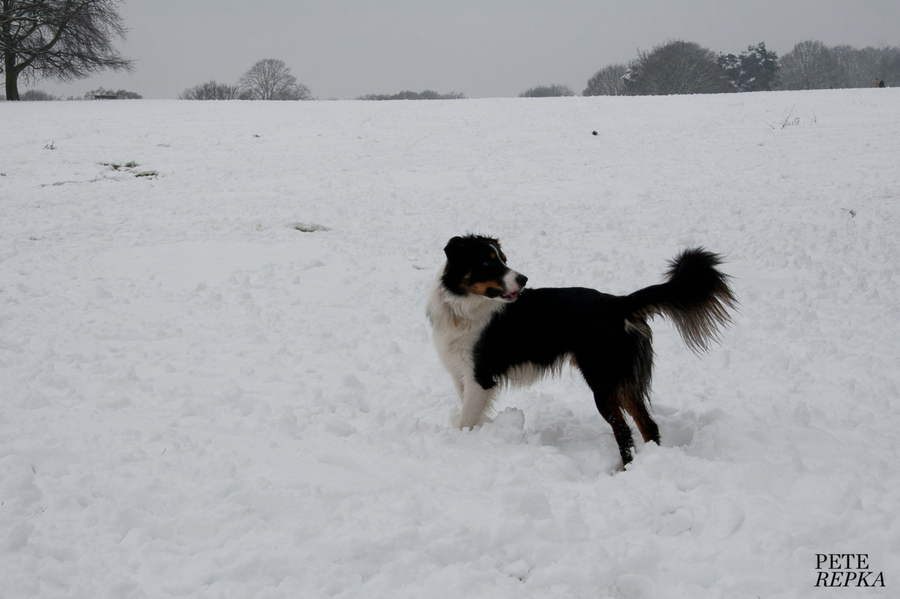 Dog Day In The Snow - no.6