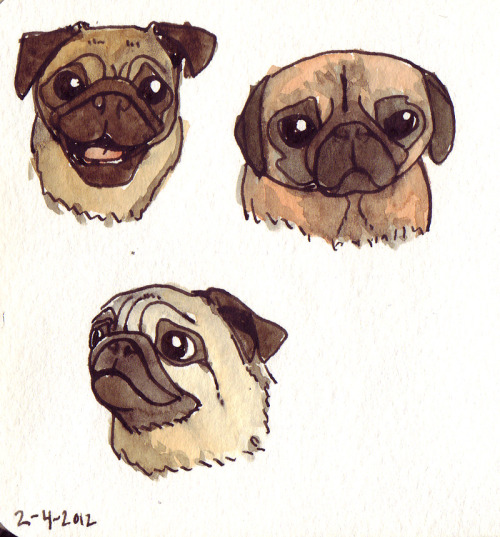 Various pug faces. Fountain pen and watercolors. February 4th, 2012.