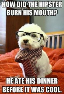 extrafeedback:  Hipster cat is too mainstrem.  its all about the hipster puppy
