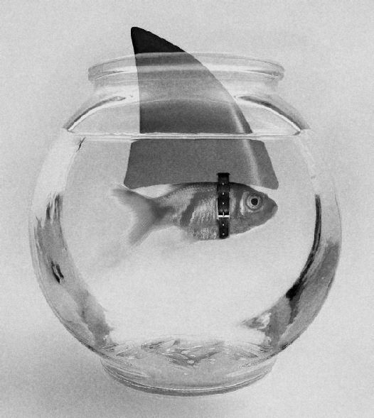 I sometimes feel I am living in a fishbowl. Corporate life is relentlessly Darwinian. You have to adapt or die.