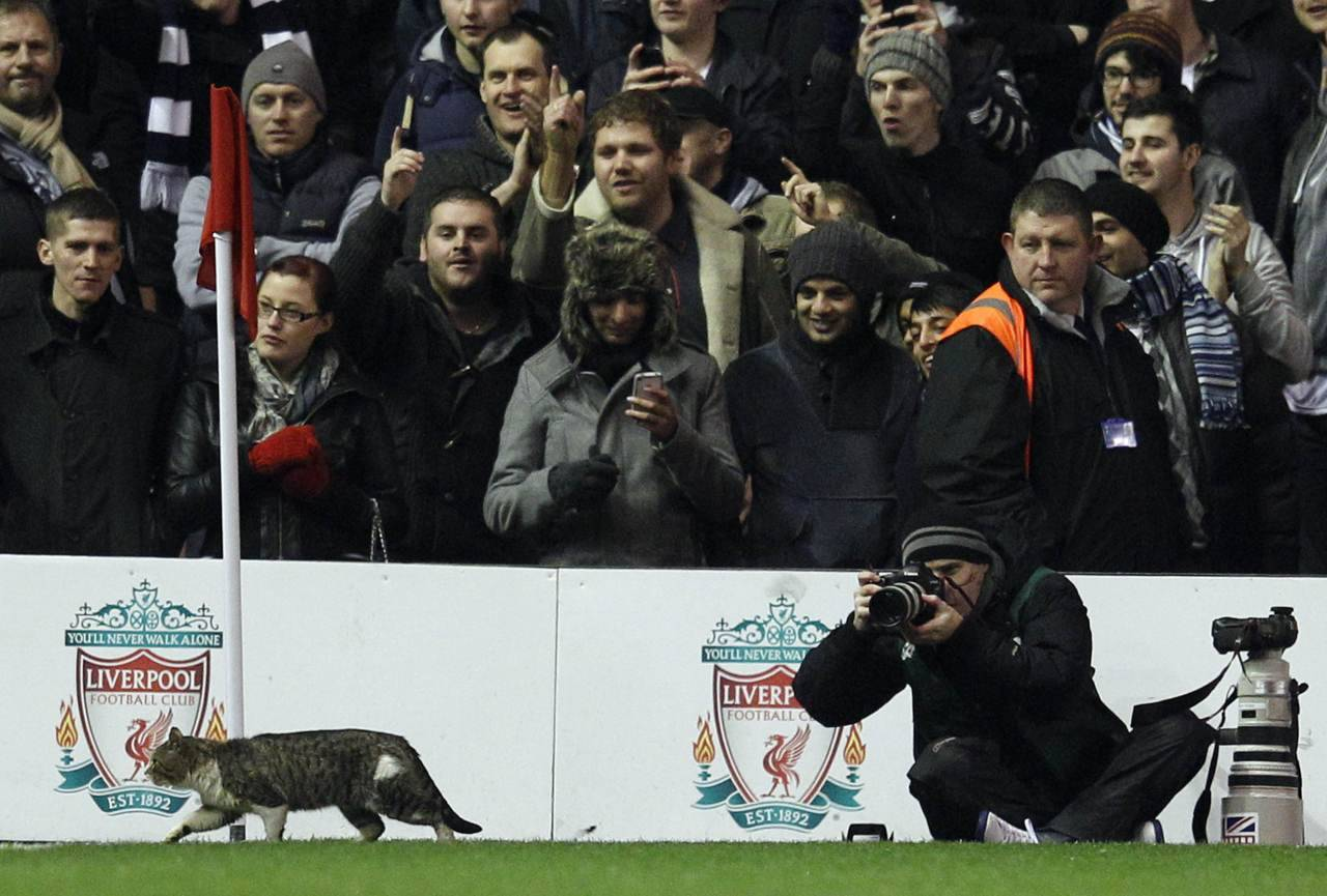 A cat walks on the pitch during the EPL soccer match between Liverpool and Tottenham Hotspur on Monday