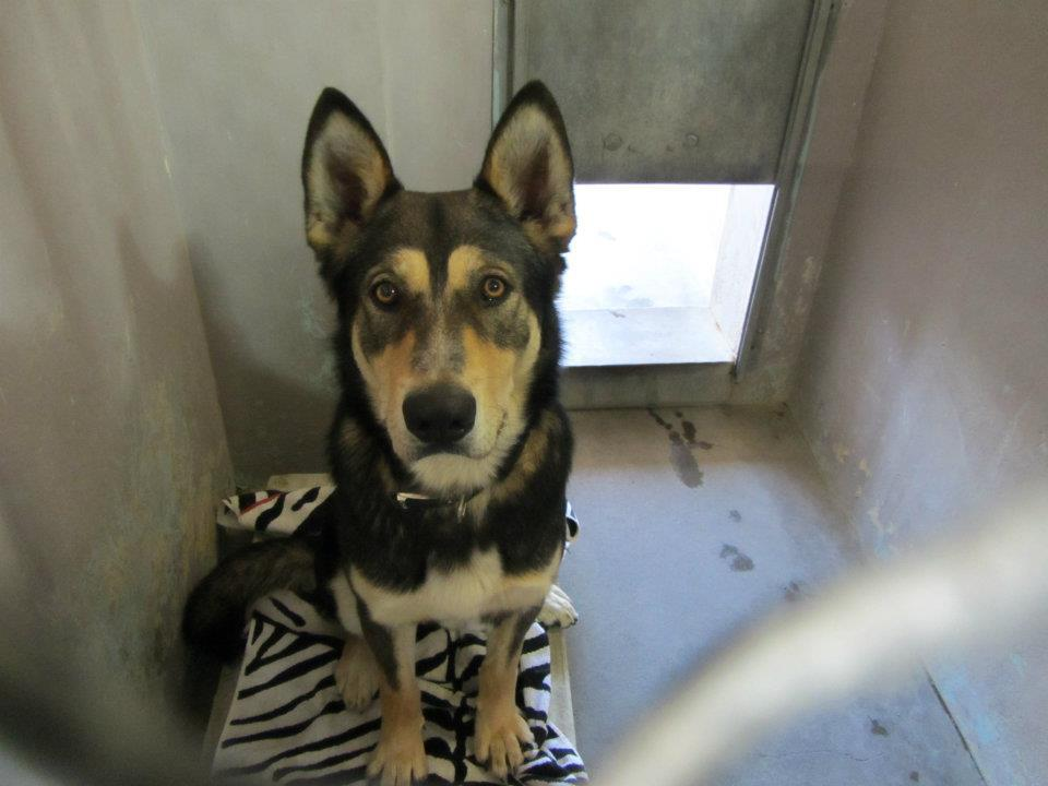 "Baldwin Park Shelter ""A4391624I am a 1 yr old male black/brown German Shepherd mix. I came to the shelter as a stray on Jan 31""  Baldwin Park shelter Open for Adoptions 7 days a Week 4275 Elton Street, Baldwin Park, California 91706 Phone 626 430 2378 Hours: Monday - Thursday 12 - 7 Friday - Sunday 10 - 5"
