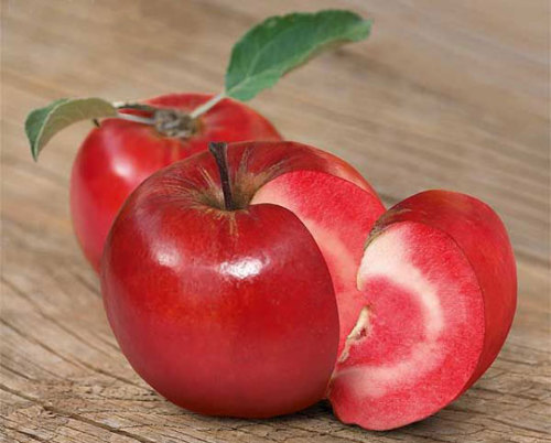 Did you know there are over 500 apple varieties? Many temperate climate countries have their own history in breeding this wonderful fruit. Characteristics important for the consumer are acidity, texture and aroma. (sugars content is important for diabetics, too). Some apples keep their shape when cooked. Pictured is a rare red-fleshed hybrid from Sutton, England. They say the taste has hints of raspberries. Our favourite is the Cox Orange Pippin. It won't win beauty contests, but certainly is the gold standard regarding taste in apples. Sadly, it is difficult to grow this variety due to its small yield and susceptibility to moulds and diseases.