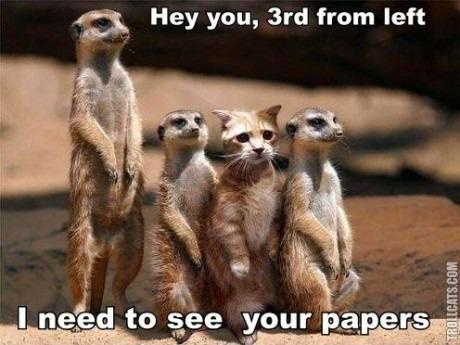 BAHAHAHAHHAH meerkats…one of my favorite animals of all time.
