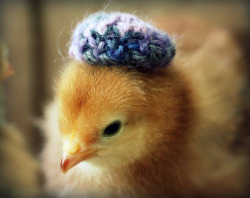 Chicks in Hats (via juliepersons)