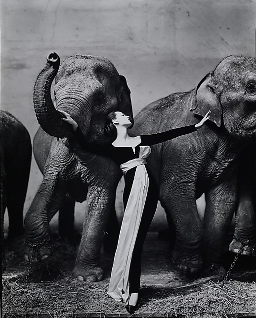 cavetocanvas:  Richard Avedon, Dovima with Elephants, Evening dress by Dior, Cirque d'Hiver, Paris, August 1955