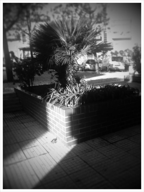 Stream of light (Taken with picplz.)
