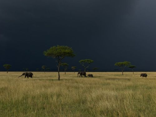 Elephants, Serengeti Photograph by Michael Nichols (via National Geographic Photo of the Day)