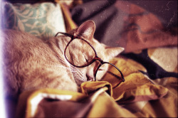 sometimes peter had a tendency to fall asleep in his library with his glasses still on and pipe still smoldering.