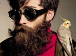 Beards and birds, both okay with me.