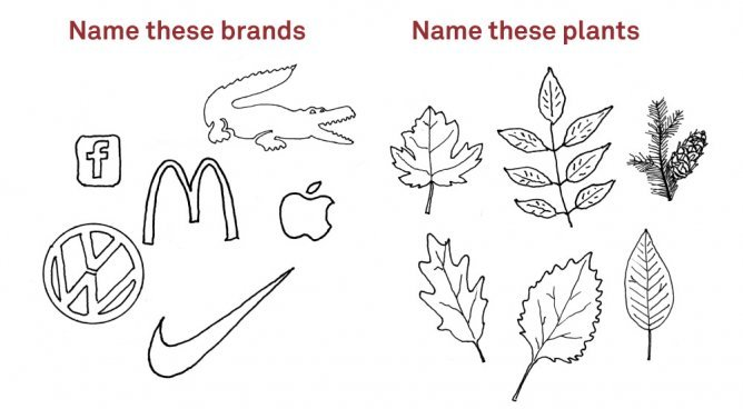 "After reblogging Adbusters' ""name that plant"" illustration a little   over a week ago, we found ourselves inundated with responses   (well-informed and/or hilarious) by followers from all over the world. I   think it might have been a point of pride to be able to tell the   difference between a maple leaf and a palm frond. (Actually, I think that might just be me.) Now that a sufficiently lengthy interlude of frustration has passed between question and answer, we finally   have the resolution for those of you who were wondering what you were   staring at with such rapt attention. To be doubly sure of ourselves, we   asked Deanna, our Associate Curator of Woody Plants, to pitch the final   word. Top Row: Maple (Acer sp.) Hickory (Carya sp.) Douglas fir (Pseudotsuga menziesii) Bottom row: Oak (Quercus sp.) Birch (Betula sp.) Black tupelo (Nyssa sylvatica) For that last one we're going with a native tree, as Deanna  informs  us it's neutral enough to be just about anything; consider it  the  freebie question on a pop quiz. (The artist here wasn't exactly  going  for botanical art to be entered into a juried competition.) —MN"