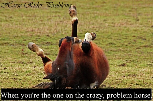 horseriderproblems:  dumbled0re-knitsWhen your the one on the crazy, problem horse.  story of my life thanks Harles<3