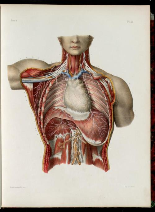 medical-illustration:  Nicolas Henri Jacob (1781-1871)