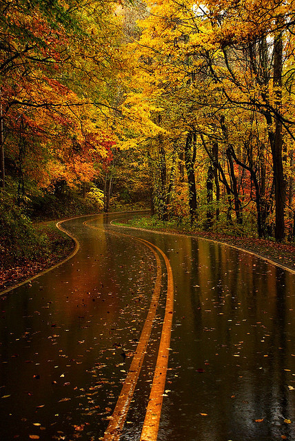 yellow leaf road by tilman paulin on Flickr.