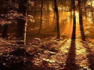Sunset in a Forest..