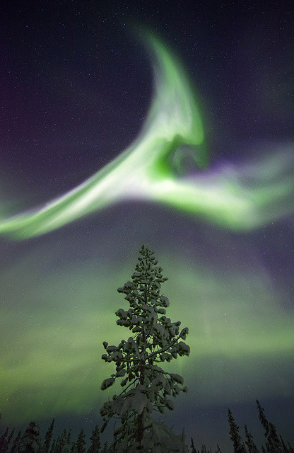 Treetop Aurora, Sweden by antonyspencer on Flickr.