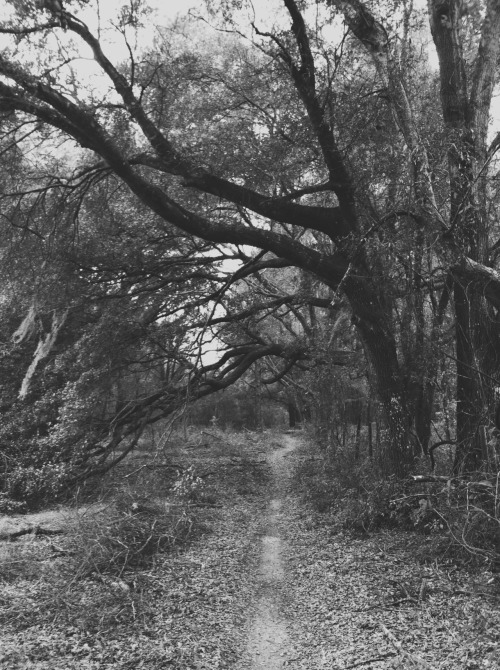Florida BackwoodsNovember 2011