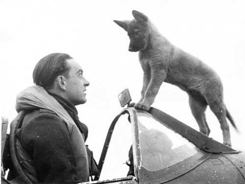"""opacasilentianoctis:  Fighter Pilot """"Spitfire"""" one of the Czechoslovak squadrons in the RAF and his dog named Sally. Meeting after the combat mission. Czechoslovak squadrons in composition in the British Royal Air Force were: 68-I 310-I, 312, 313th (fighter) and 311-I (Bomber)."""