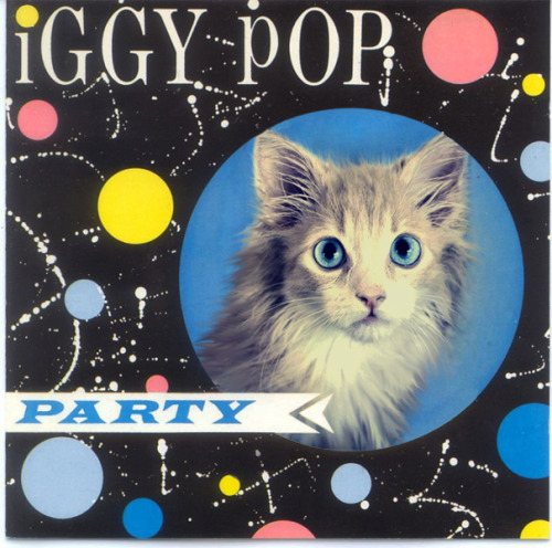 Kitty Pop